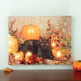 Lighted Black Cat and Pumpkins Wall Canvas